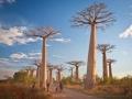 baobab 2.jpg