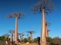 baobab-alley-loc-9-roger-lang.jpg