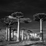 baobab beth moon